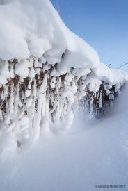 Snow pompoms